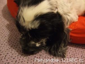 Fotka spícího Nathyho.