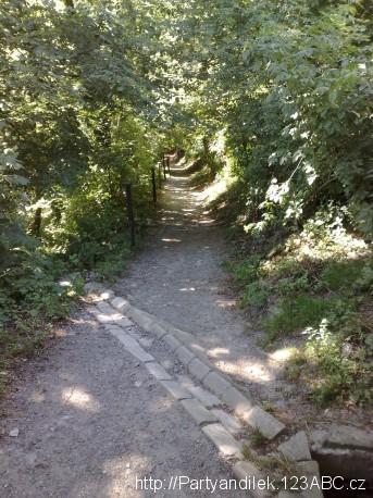 Foto z CHKO Český kras. Pořádná džungle.